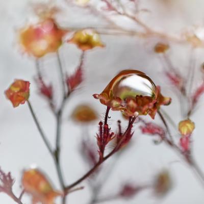 00 fleurspluie catalogue 3