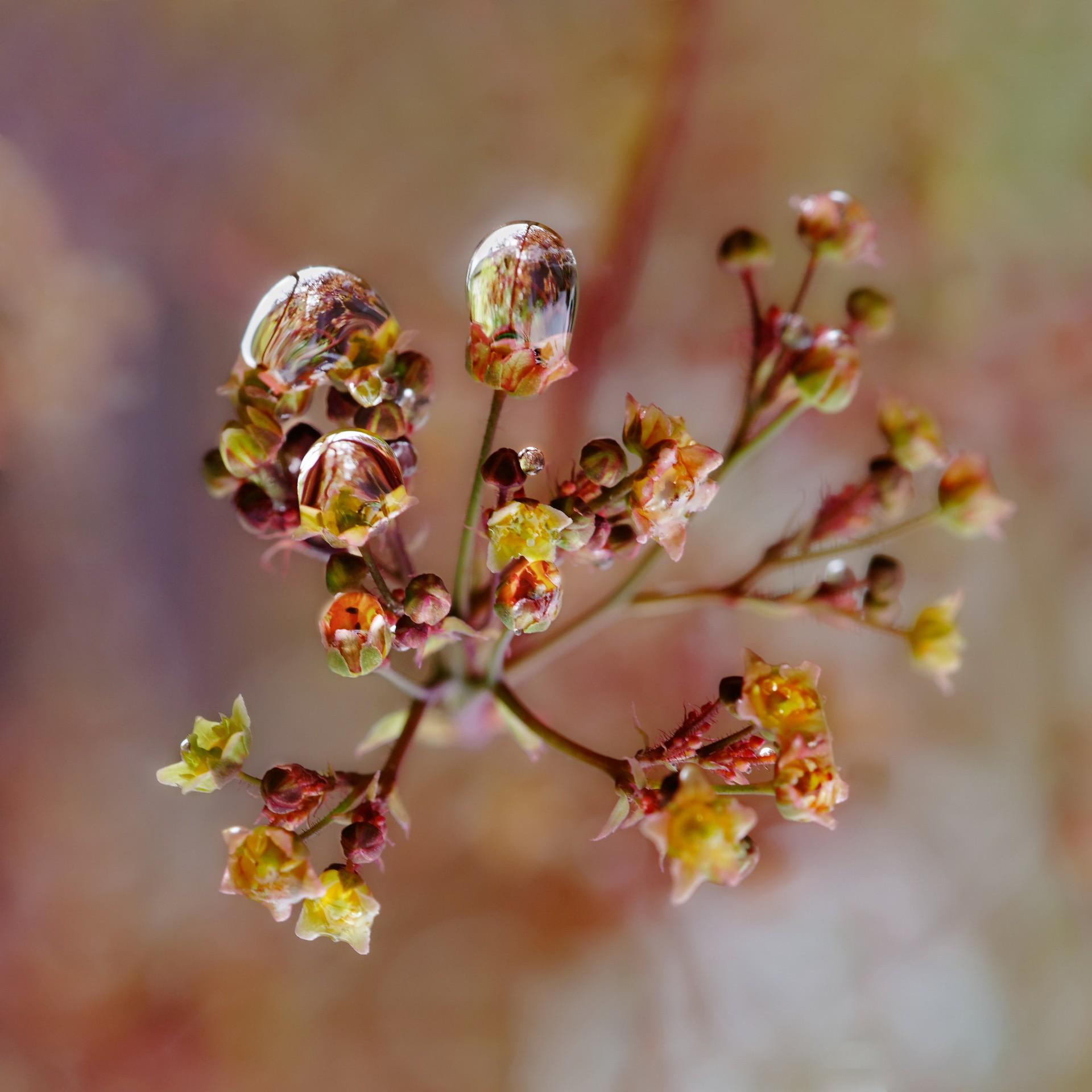 00 fleurspluie catalogue 4