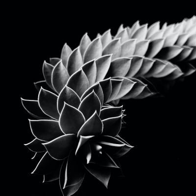 01 tirer le portrait de plantes 13