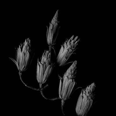 01 tirer le portrait de plantes 15