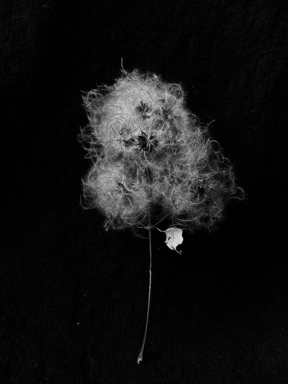 01 tirer le portrait de plantes 16