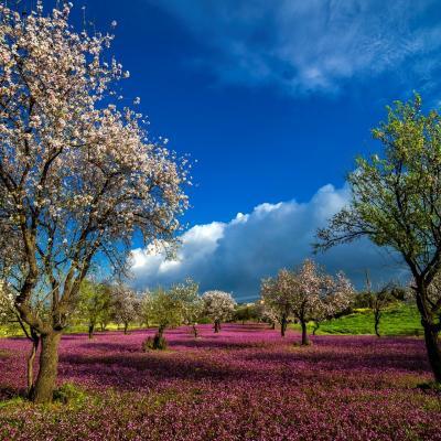 Eloud Nassim, paysage de Crète