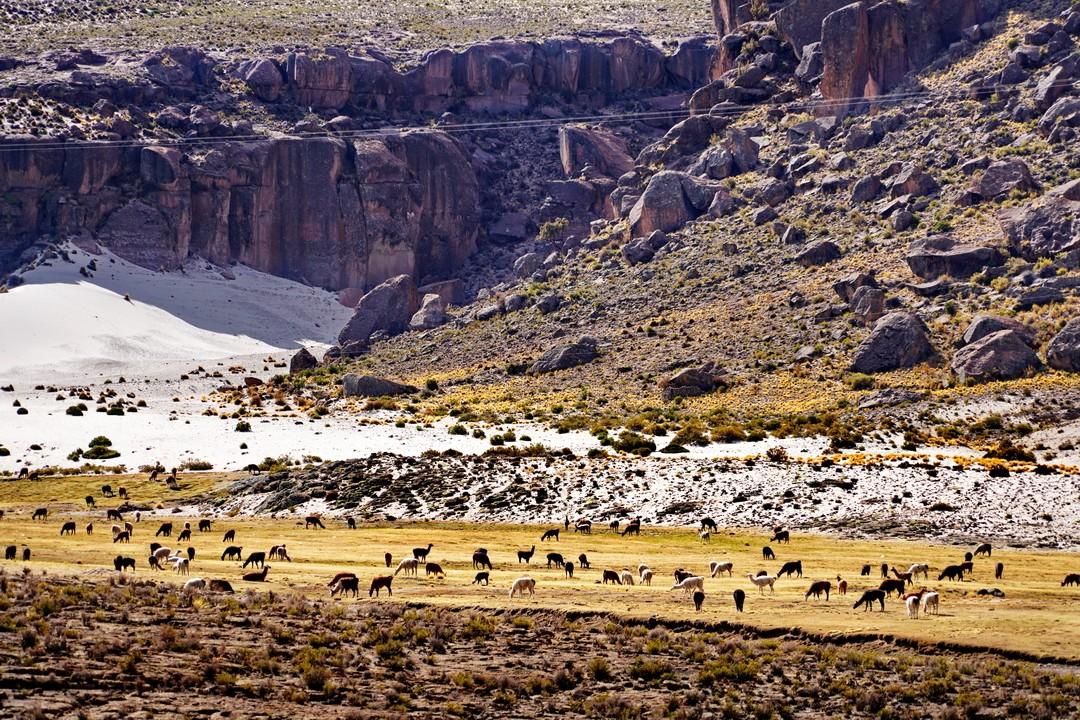 Altiplano-04