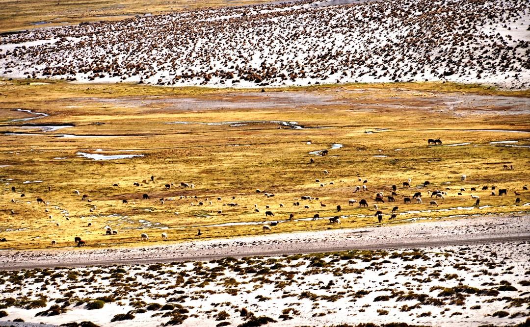 Altiplano-06