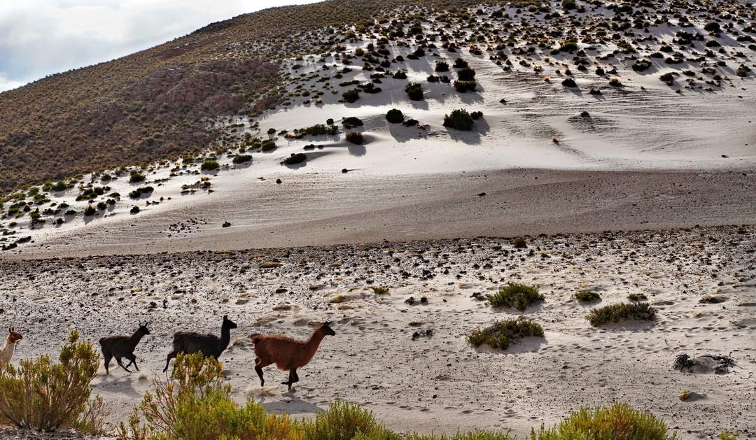 Altiplano-08