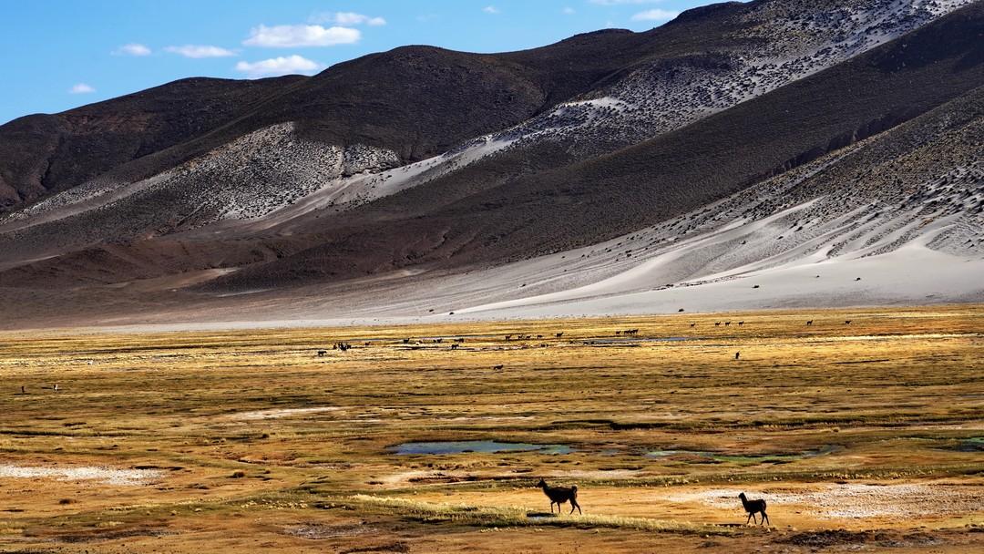 Altiplano-09