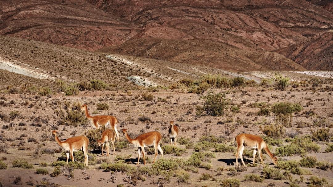 Altiplano-10