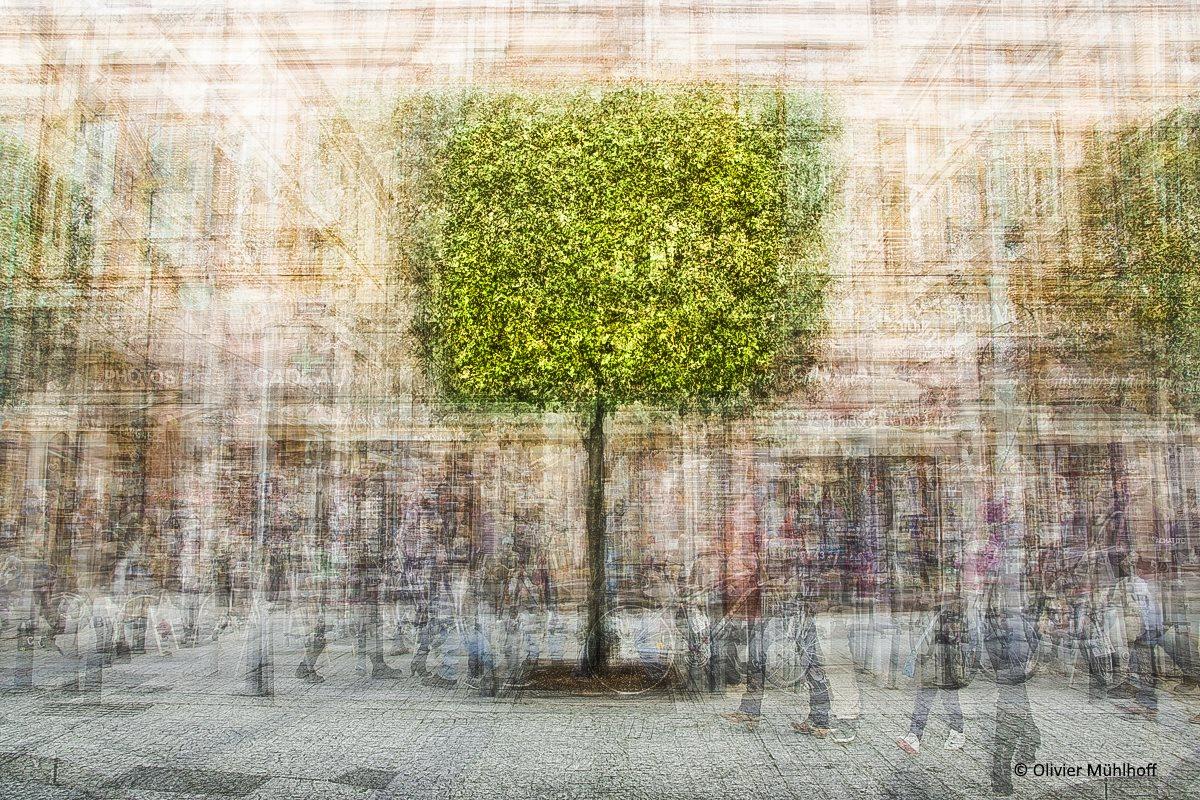 Arborescence,  de Olivier Mühlhoff