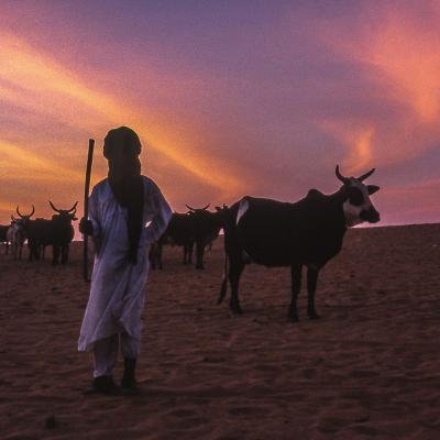 Berger vache soleil couchant