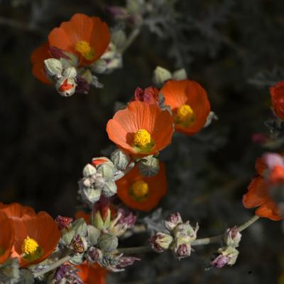 Fleurs dans le desert orange