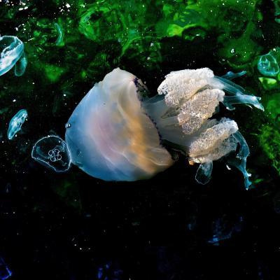 Jellyfish10 copier