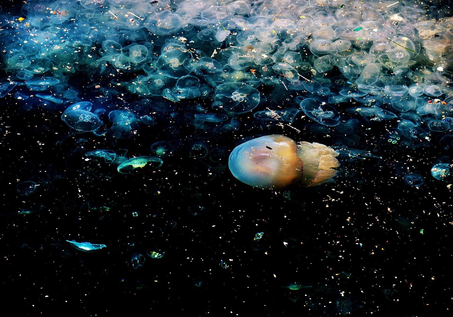 Jellyfish16 copier