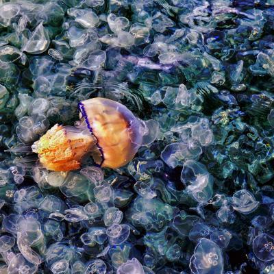 Jellyfish2 copier