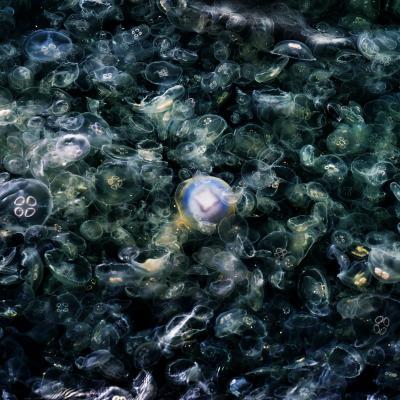 Jellyfish5 copier