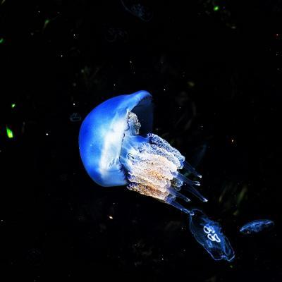 Jellyfish6 copier