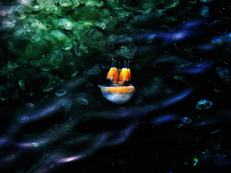 Jellyfish7 copier
