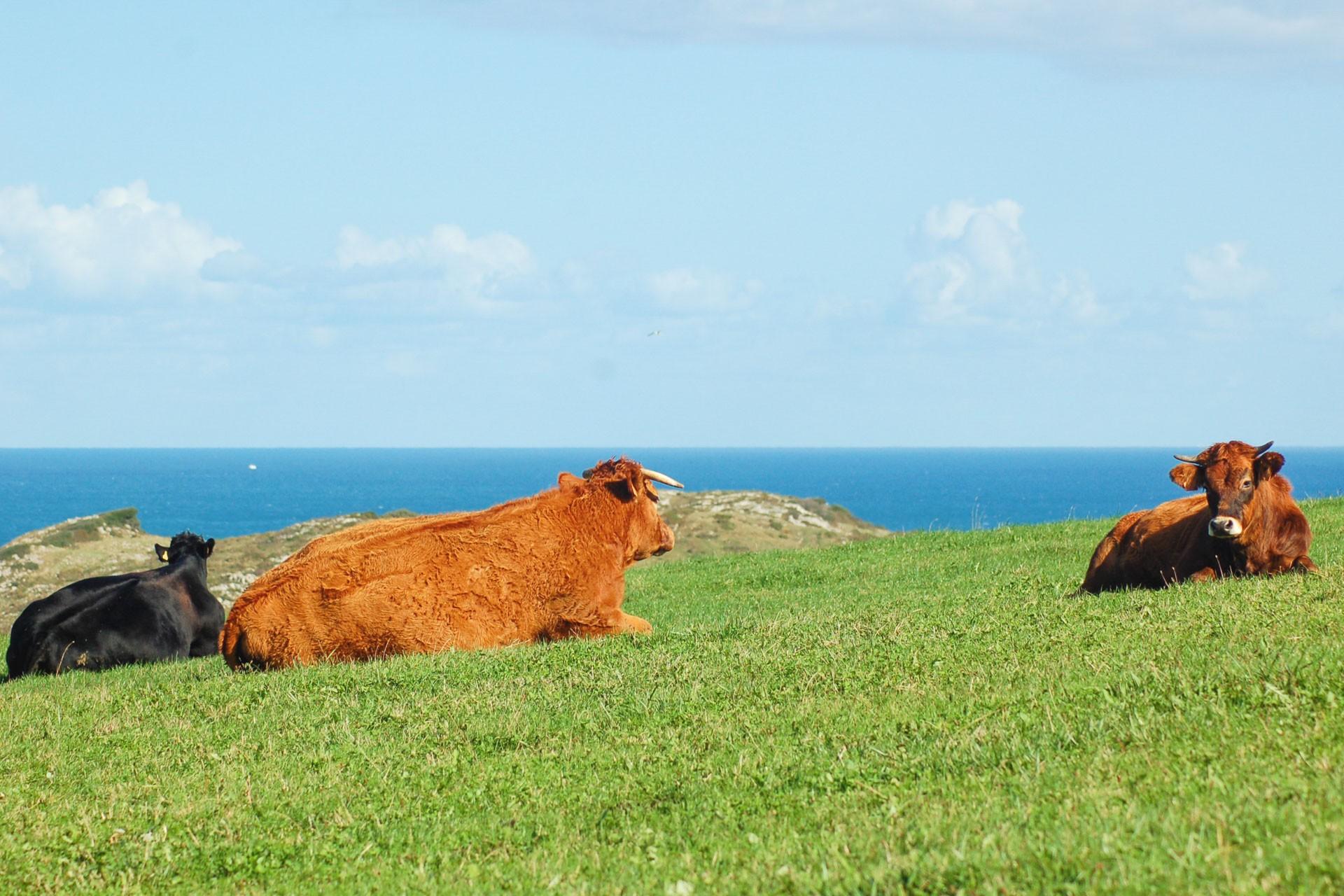 L amour vache 13
