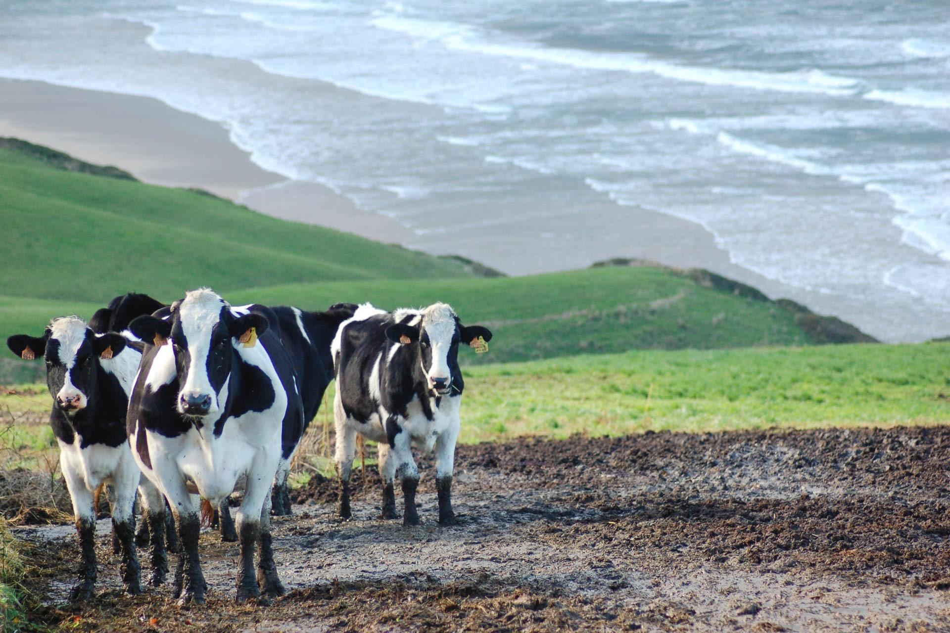 L amour vache 14