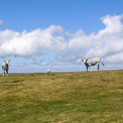 L amour vache 5