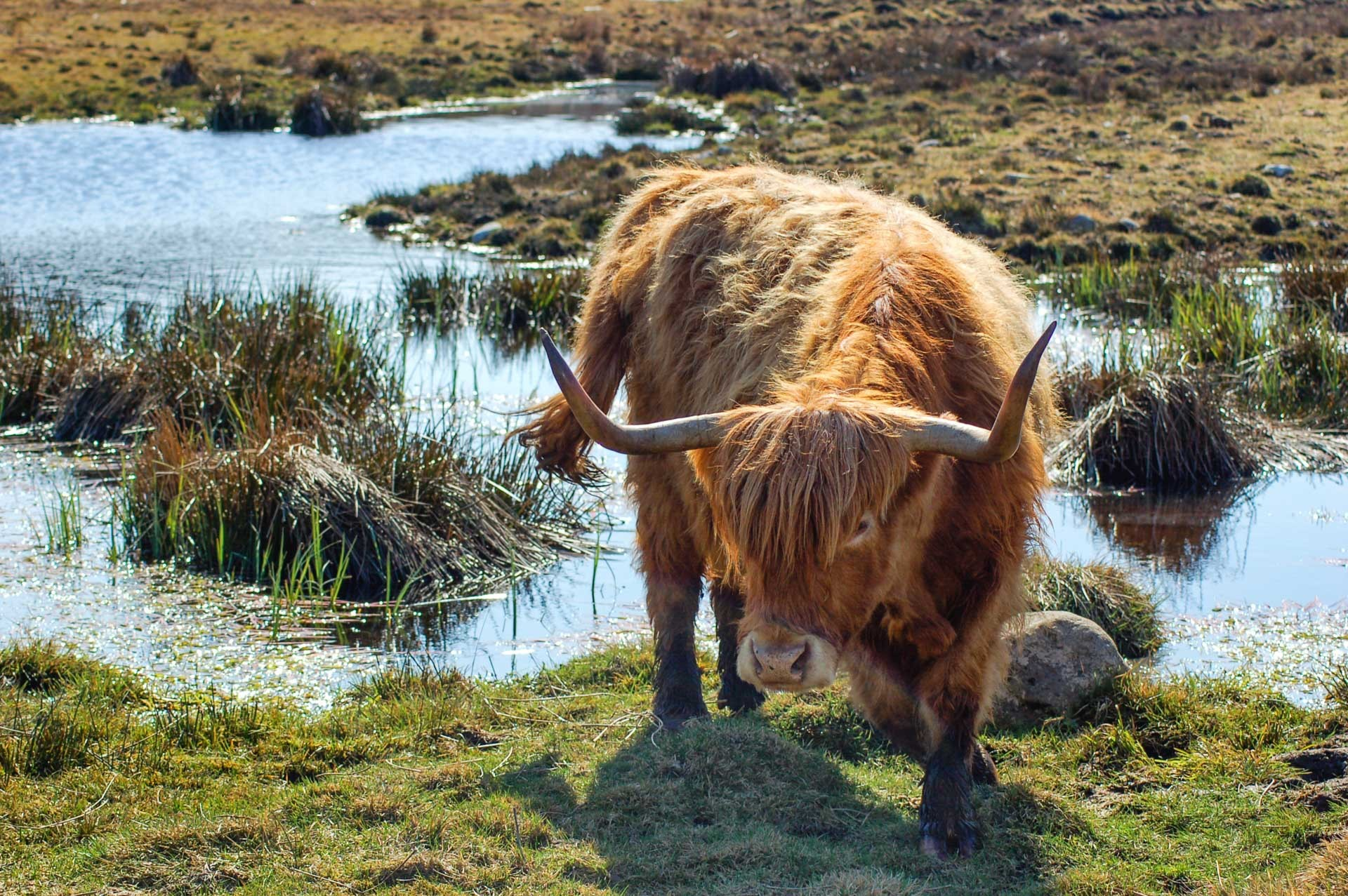 L amour vache 9