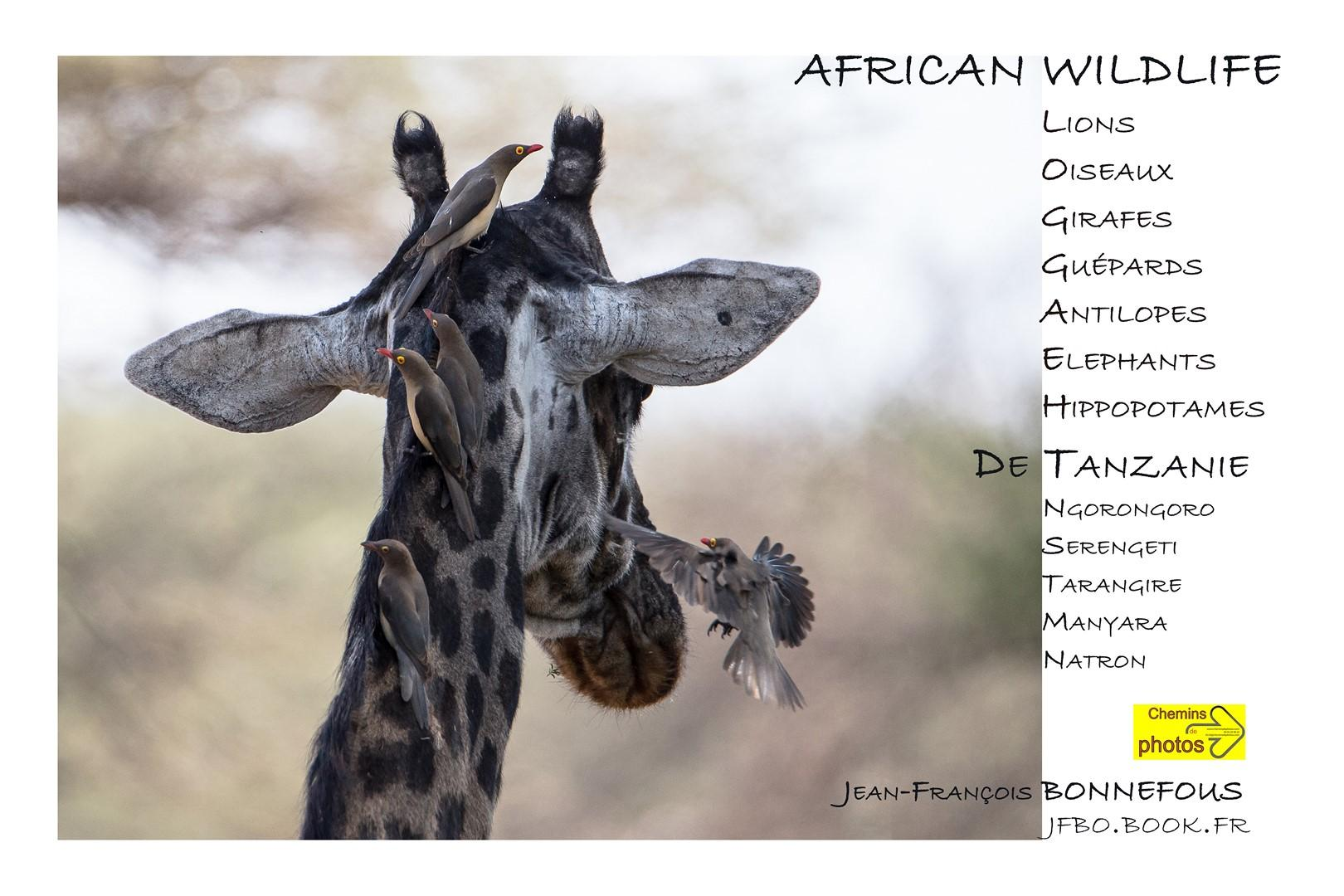 Bonnefous african wildlife presentation copier