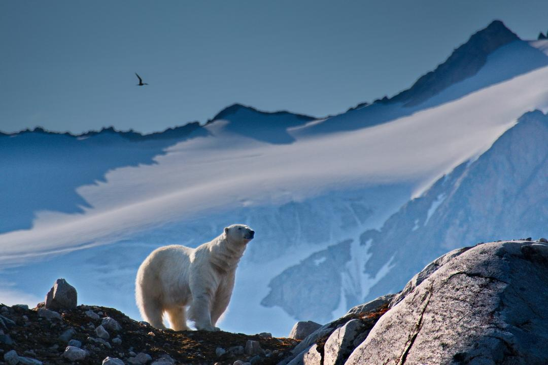 Corriol arctique 02 nw0568 spitzberg smeerenburg