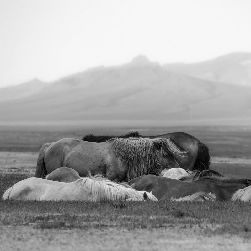 Habitants de la steppe