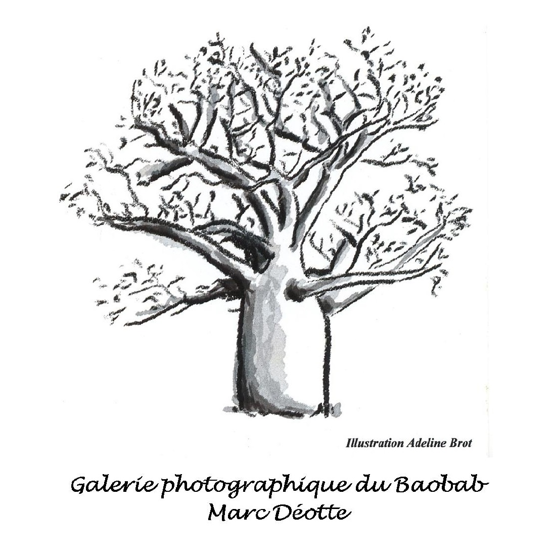Logo galerie du baobab carre 1