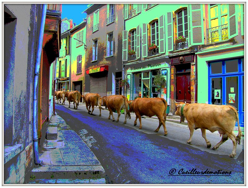 Vaches2